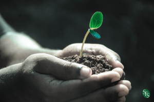 Starting a New Business, Here are 10 Things You Need to Know, SFS Tax, SFS Tax and Accounting, new growth, seedling, earth, hands